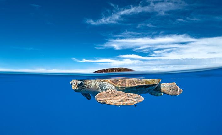 Iniciativa açoriana visa resíduos oceânicos